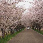 ロードスターで行く、琵琶湖の名所、海津大崎を桜ドライブ