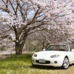 2019年の~桜を求めてドライブ!